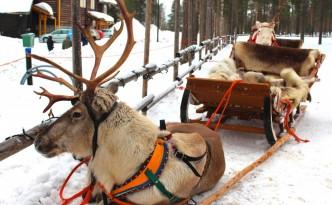 Los renos del Santa Claus Village.
